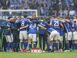 Schalke: Favorit oder nicht - das ist hier die Frage