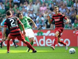 Tor beim Startelf-Comeback: Claudio Pizarro (mi.) erzielt das zwischenzweitlich 2:1 für Werder