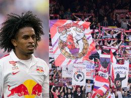 Logo-Zoff: RB Salzburg erz�rnt die Fans