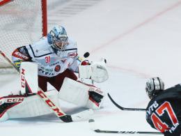 Augsburger Panther verpflichten Goalie Roy