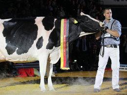 Kuh vor Korb: 4. BBL-Finale in Bremen