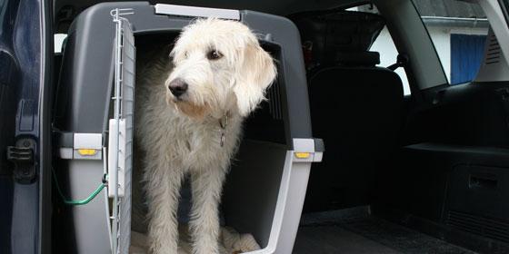 Hund im Transportkorb