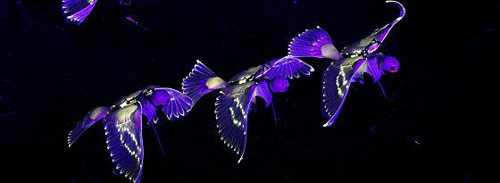 Fliegende Tauben auf Rädern